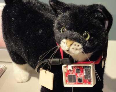 Katzen Stalking mit Halsbandkamera