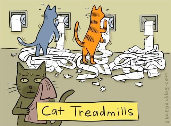 Fitnessstudio für Katzen