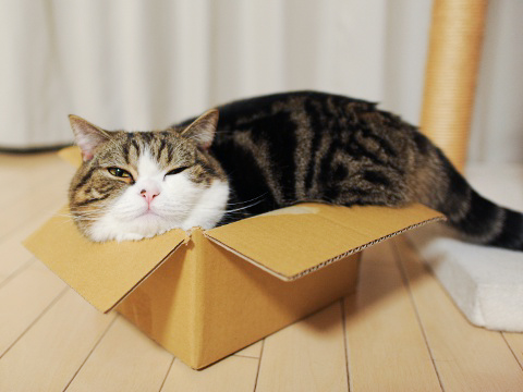 Maru und andere coole Katzen