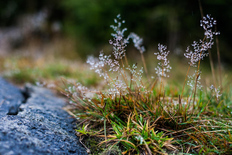 Märchenwald – Kurzurlaub im Harz