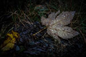 Die Juwelen des Waldes