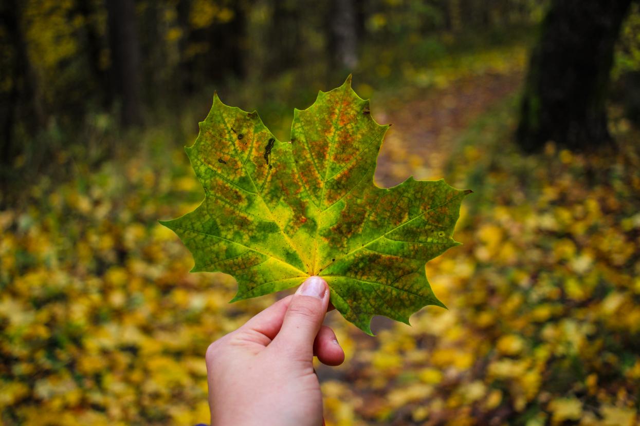 Fotografieren im Herbst – Herbstblues ade!